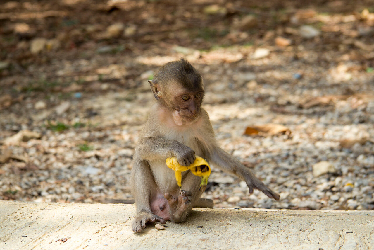 Thailand  Wat Tam Pan Turat or Khao Sok Monkey Temple