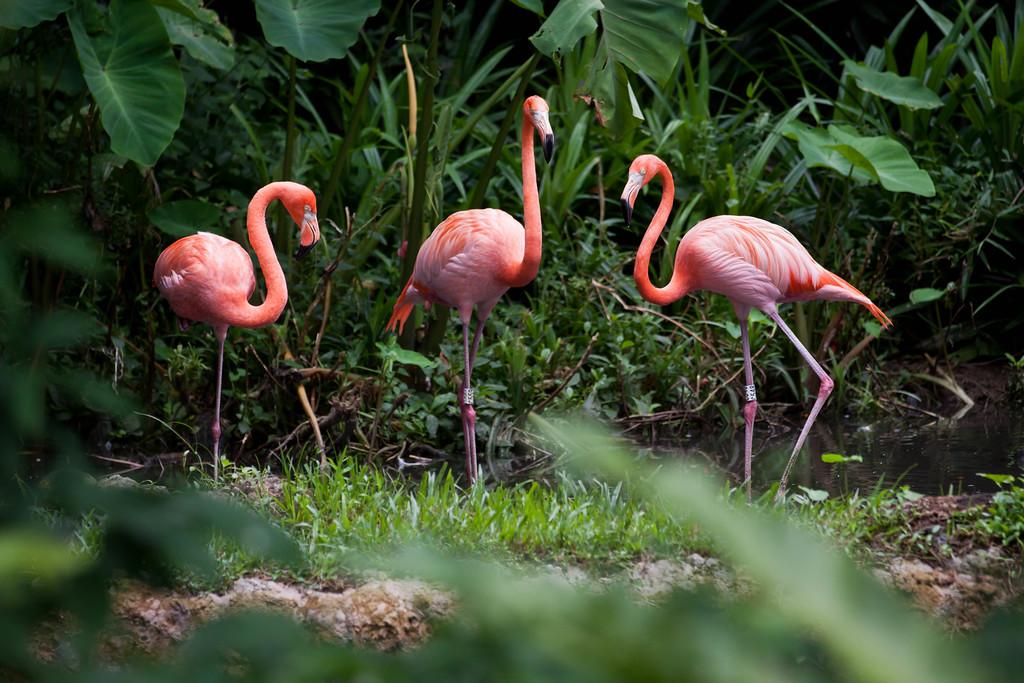 Flamingo Symmetry