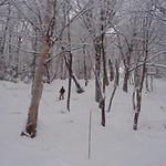 Chris skiing down Poacher's Woods