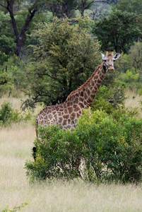 Lots of giraffes too.  Note the Ox Pecker bird on its neck!