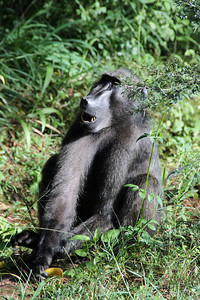 Our first wildlife -- a baboon.  It had just rummaged in a garbage can and found the remains of a banana....note the remains of the peel in its hand.
