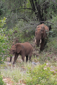 We came across a lot of elephants, here a mother and baby that were part of a herd of 12 crossing a river.