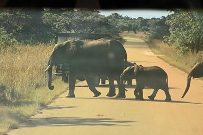 Another road hazard!