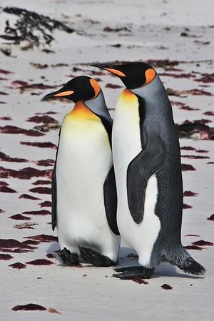 Best Wildlife - South America Cruise 2017