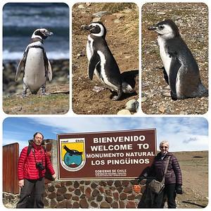 Penguins… Penguins… Penguins… Magdalena Island wildlife sanctuary in the Strait of Magellan.