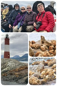 Critters...Critters...Critters. Beagle Channel tour yesterday. Found a herd of sea lions by an old lighthouse on a small island.