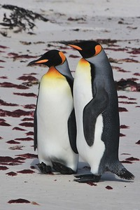 Favorite picture of the day in the Falkland Islands!