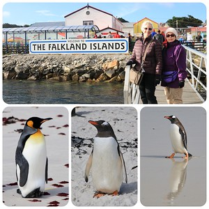 More penguins... on the Falkland Islands. King penguins and Gentoos. Another beautiful day in the South Atlantic.