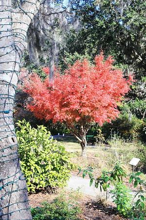 Brookgreen Gardens RGB