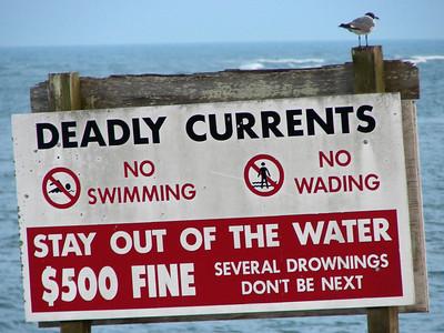 July 20, 2008 (Pitt Street Bridge, Sullivan Island, Charleston Co., South Carolina) - Laughing Gull on sign over beach near bridge over Breach Inlet.