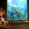 Sitting watching the show.  The lady drawing on the board has a microphone, and the diver in the tank has on a full face mask an