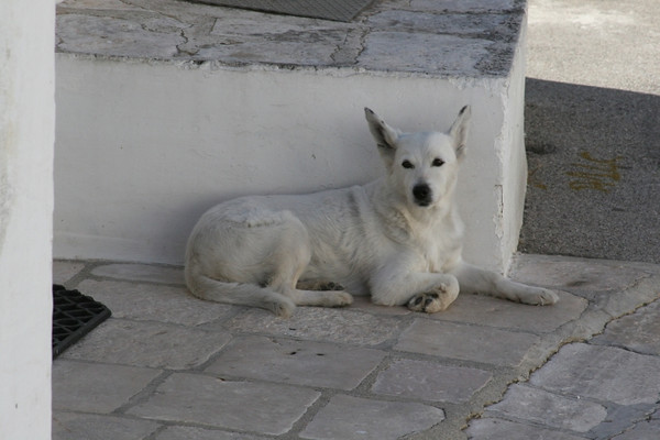 and a white dog. (her name has to be Trulli)
