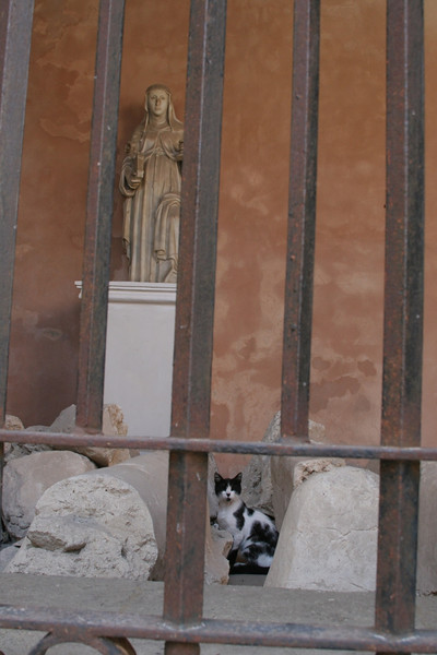 Church closed for renovations. the guard cat.