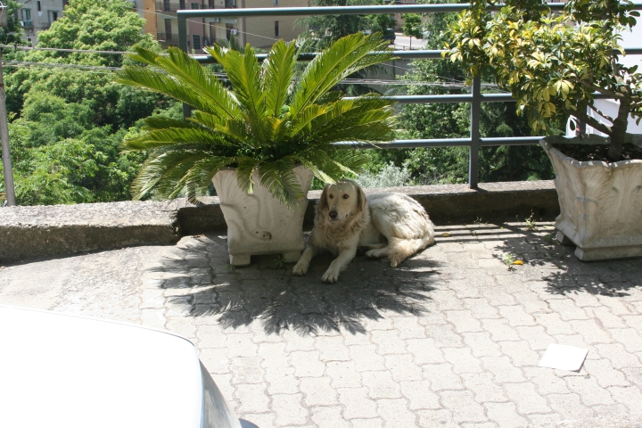 Wherever we went there was a white dog (always in the shade)