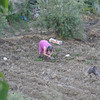 Now the chef-bread-baker, Carmela, is in the garden.