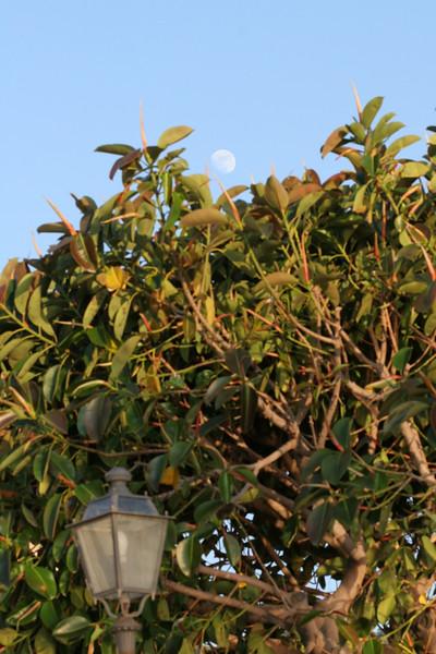 moon over magnolia