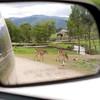 Wildlife Safari in Winston Oregon as seen through the mirror of my truck.