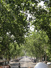 Barcelona - tree-lined street