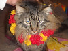 Our favorite Barcelona kitty ( (and only encounter) dressed for a luau