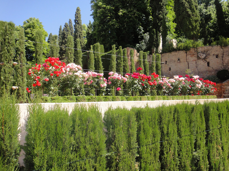 Granada - The Alhambra rose gardens