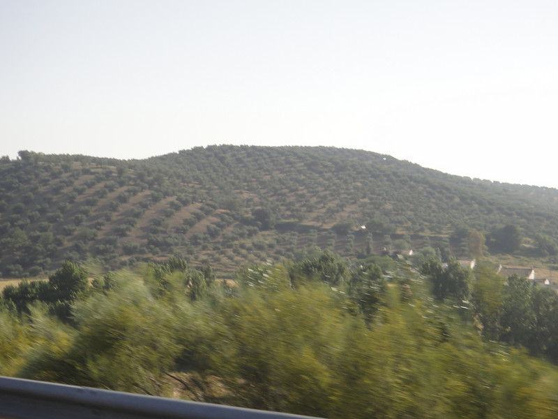 More olive groves. It smells like green olives and olive oil when you drive though the groves