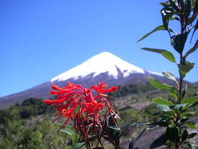 Cool flower with volcano in background