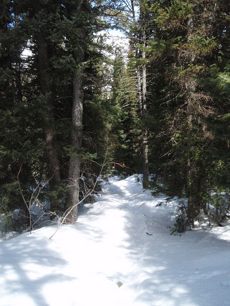 We veered of the trail on the way back and did some deeper snowshoeing.