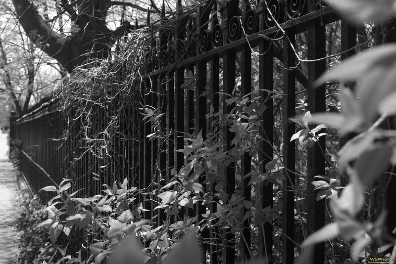 """Heritage Hill Historic District<br /> Grand Rapids, MI<br /> <br /> I like wrought iron fencing and liked this fence line. Couldn't decide if I liked it better in color or black & white so posted both.<br /> <br /> Some of the beautiful homes in the historic district.<br />  <a href=""""http://www.heritagehillweb.org/"""">http://www.heritagehillweb.org/</a><br /> 126 College Ave. SE Grand Rapids , MI 49503<br /> <br /> New Walking Tour Brochure<br />  <a href=""""http://www.heritagehillweb.org/pdf/WalkingTour0908.pdf"""">http://www.heritagehillweb.org/pdf/WalkingTour0908.pdf</a>"""