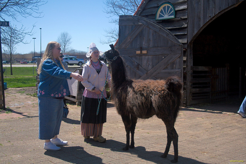 """Nelis' Dutch Village<br /> The highlight of our visit to Nelis' Dutch Village - walking Mr. T, the totally cool llama!<br /> <br />  <a href=""""http://www.dutchvillage.com/"""">http://www.dutchvillage.com/</a><br />  <a href=""""http://bit.ly/ilgpU5"""">http://bit.ly/ilgpU5</a>"""