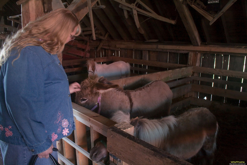 """Nelis' Dutch Village<br /> Peggy enjoying her time with the animals at the petting zoo. I have vague memories of having been here as a young child with my Grandma and Grandpa Golofit.<br /> <br />  <a href=""""http://www.dutchvillage.com/"""">http://www.dutchvillage.com/</a><br />  <a href=""""http://bit.ly/ilgpU5"""">http://bit.ly/ilgpU5</a>"""
