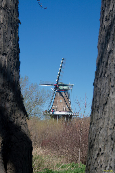 "Windmill Island Gardens<br /> The windmill framed by a couple of trees near what is called the Post House. Sadly we arrived a little to early in the season to see the tulips in full bloom.<br /> <br />  <a href=""http://www.cityofholland.com/windmillislandgardens"">http://www.cityofholland.com/windmillislandgardens</a><br />  <a href=""http://bit.ly/melWRy"">http://bit.ly/melWRy</a>"