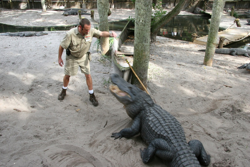 Z- Alligator farm