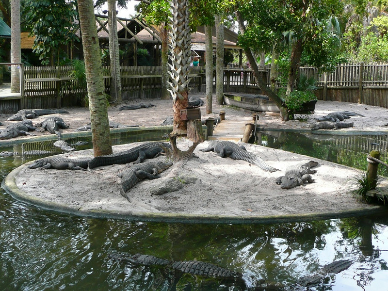 Z- Alligator farm