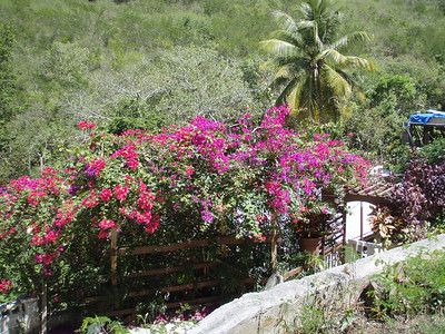 These flowers are all over the place - this is an arbor at one of the houses on route 10