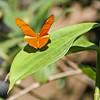 Butterfly Farm: SXM 09