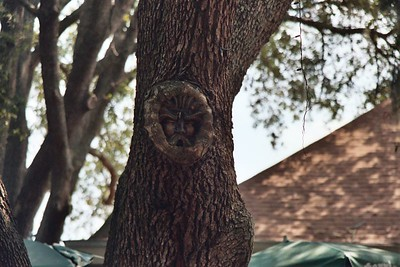 Tree spirits carved into the trees by a North Carolinian no less!