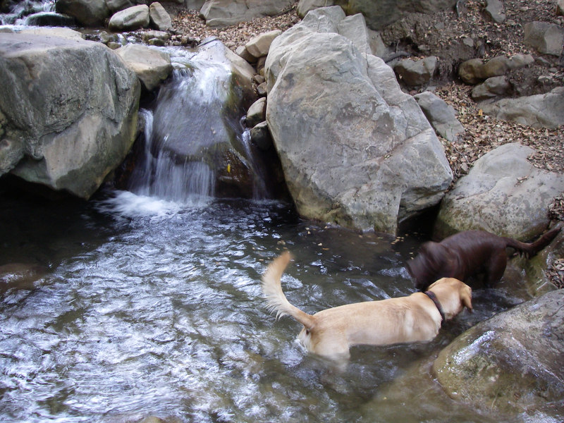 Little chute with Peso and Penny playing in the water