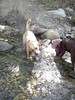 Peso and Penny P. Pooper playing in the water