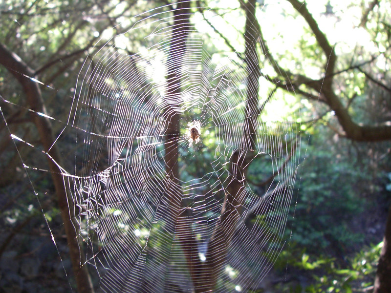 Another cool spider web