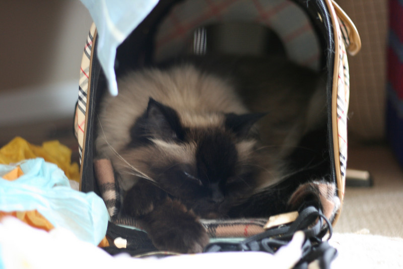 Evidence that Mak can actually sleep in his carrier and not just have a panic attack in there.