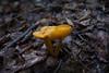 ..Mushroom..