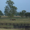 Kentucky horse farms...