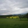 Grass & Canola field