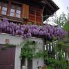 Flowers on Farm house near Kappel