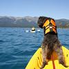 Wookie looking around as we kayak.