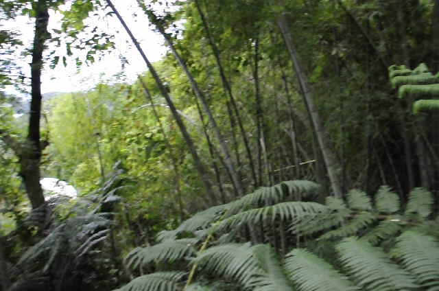 This is while walking through the jungle by Sun Moon Lake.  It was really hot and humid outside, the mosquitoes were eating us alive and 2 monsoons were on the way!  lol!
