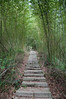 Stairs off through a large clump of bamboo