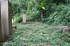This is a really overgrown seating area on the hiking trail in the jungle by Sun Moon Lake