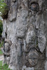 A few of the faces carved into the tree