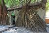 Anping Treehouse 安平樹屋